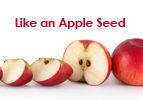 Like an Apple Seed