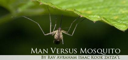 Tazria: Man Versus Mosquito