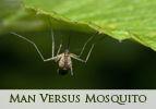 Man Versus Mosquito