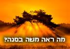 פרשת השבוע שמות - מה ראה משה בסנה?