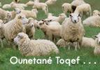 Ounetané Toqef . . .