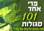 נוני - פרי אחד - 101 סגולות