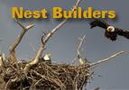Nest Builders