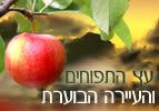 עץ התפוחים והעיירה הבוערת