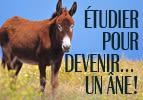 Étudier pour devenir… un âne !   Vayé'hi
