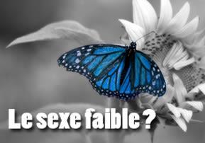 Le sexe faible? - Vaéra