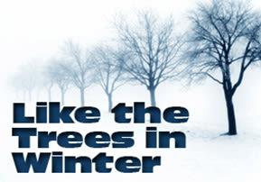 Tu B'Shvat: Like the Trees in Winter