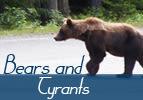 Bears and Tyrants