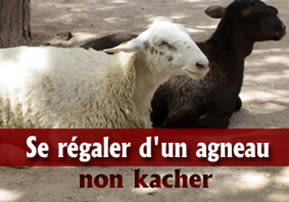 Se régaler d'un agneau non kacher ?