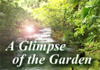 A Glimpse of the Garden