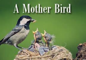 Ki Teitzei: A Mother Bird
