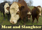 Meat and Slaughter