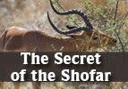 The Secret of the Shofar