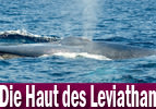Die Haut des Leviathan - Bereschit