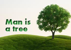 Tu B'Shvat: Man is a Tree