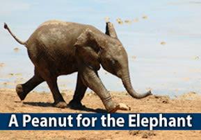 A Peanut for the Elephant
