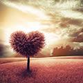 Das Herz der Kabbala