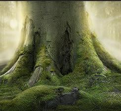 Das Geheimnis vom Baum der Erkenntnis