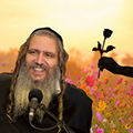 שקר החן והבל היופי | הרב שלום ארוש תקצירים