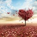 Liebe auf ersten Blick