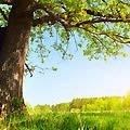 Дерево человека