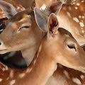 Through The Eyes of a Deer