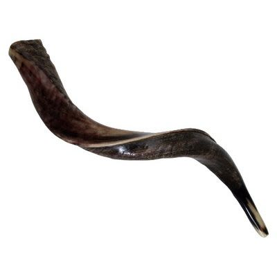 Yemenite Shofar, small
