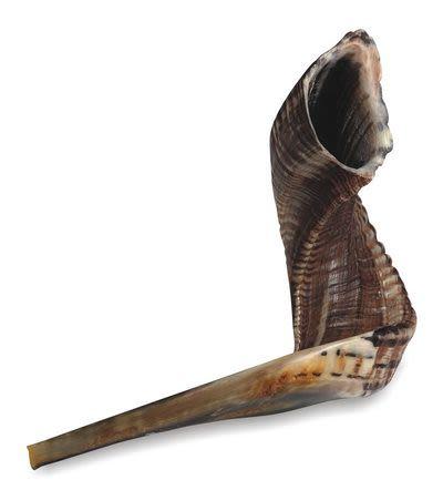 Shofar, Size 3