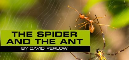 The Spider and the Ant