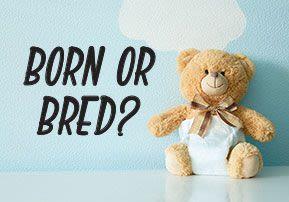 Toldot - Born or Bred?