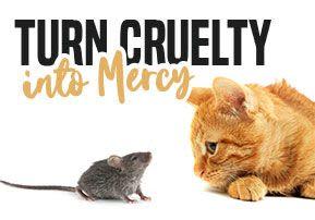 Terumah - Turn Cruelty into Mercy