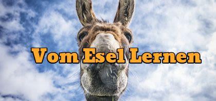 Vom Esel lernen