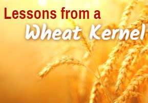 Lessons from a Wheat Kernel